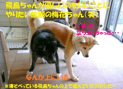 f0121712_12101083.jpg