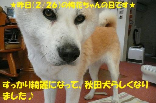 f0121712_121665.jpg
