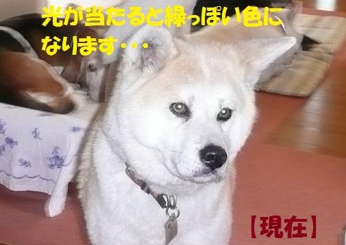 f0121712_13103572.jpg