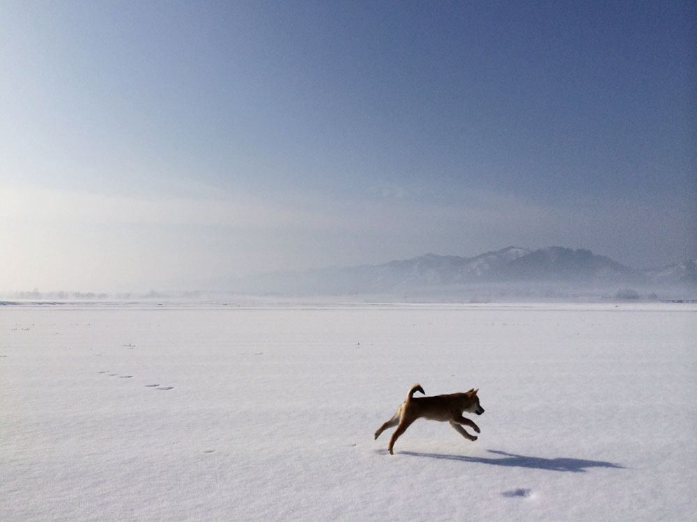 初めての雪原を突っ走って・・・_e0162117_13305223.jpg