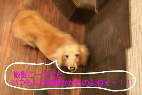 b0130018_2314538.jpg