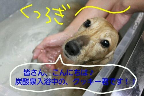 b0130018_231741.jpg