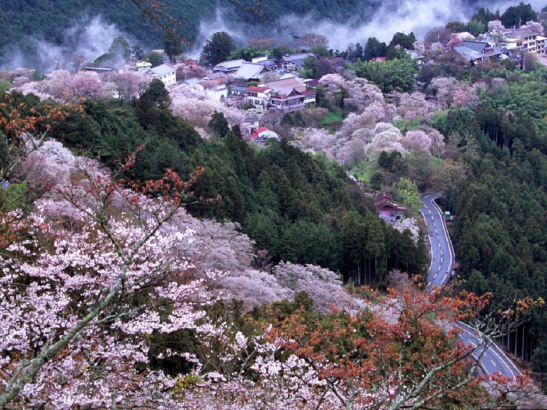 吉野へ_c0113733_1101511.jpg