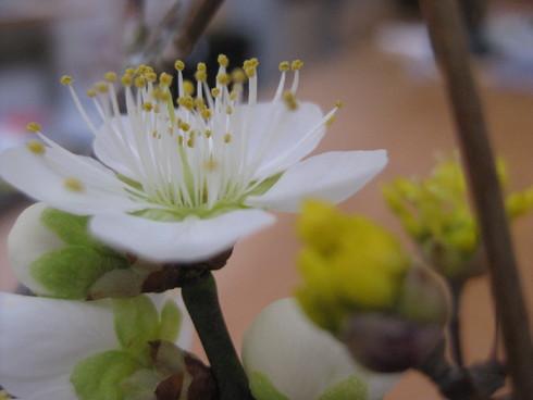 倉敷ガラスと庭の花_d0145345_1410584.jpg