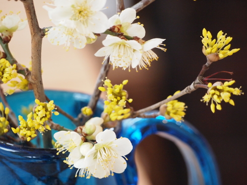 倉敷ガラスと庭の花_d0145345_1410899.jpg