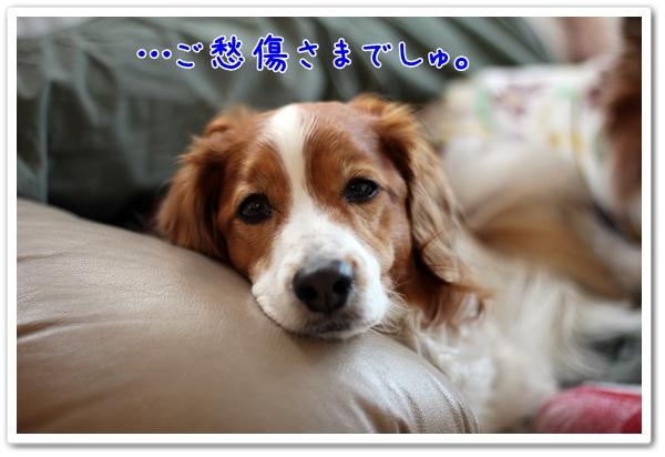 d0013149_13134759.jpg