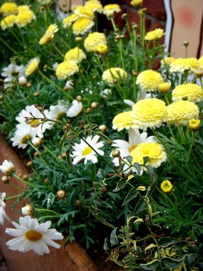 """""""春爛漫""""@長谷川町子美術館。。。_a0229658_157337.jpg"""
