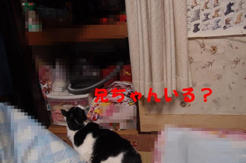 e0018604_18205223.jpg