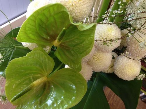 今週のお花とセール情報_a0200423_0124482.jpg