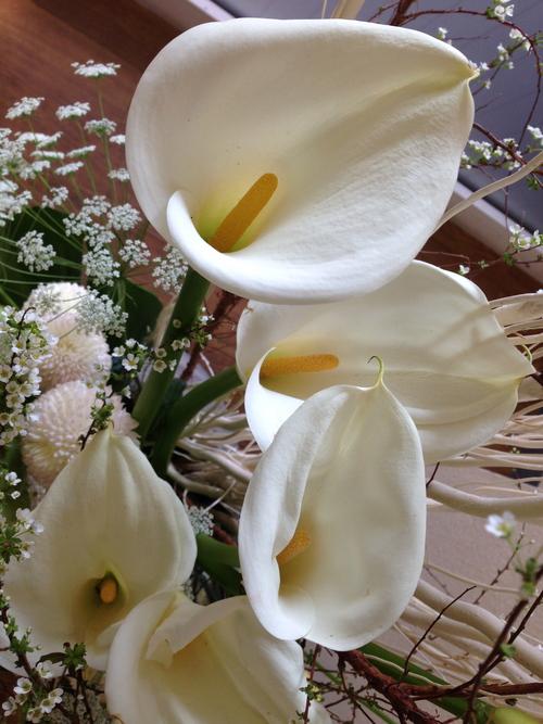 今週のお花とセール情報_a0200423_013238.jpg