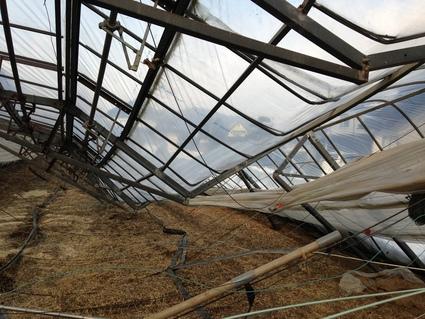 大雪による 「農業の被害現地調査」_f0259324_22121371.jpg