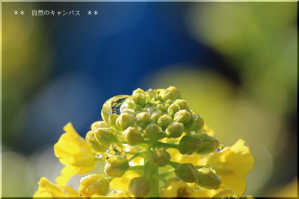 e0052135_1915520.jpg