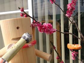2014春 暮らしと木のフェア開催決定!!_b0211845_14334420.jpg