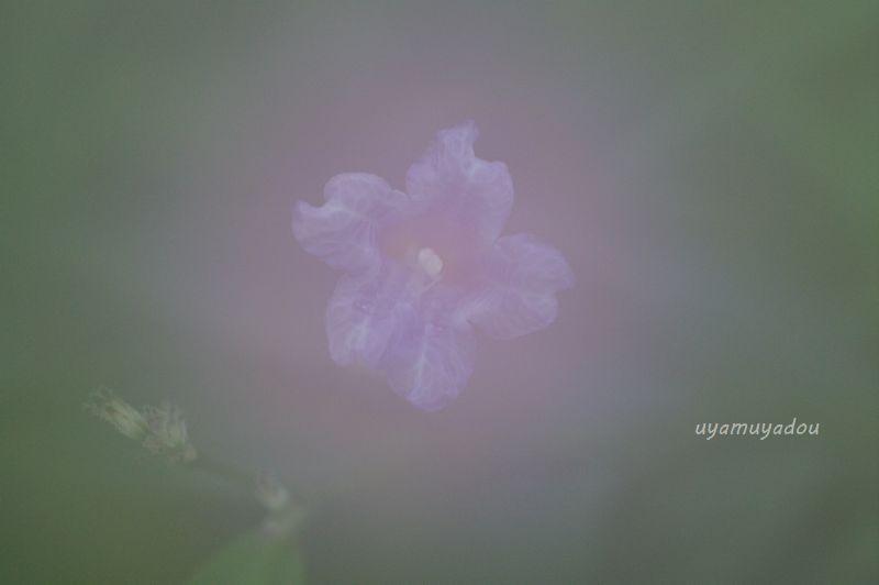 春への...想い_a0157263_09011433.jpg