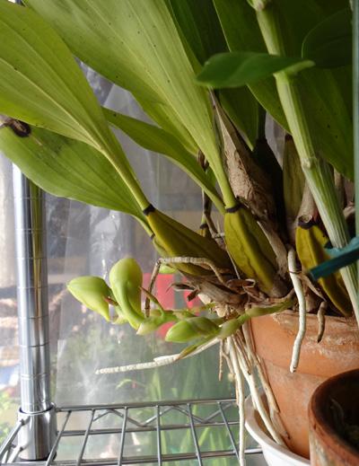ミニシクラメンの葉組み、多肉植物に素焼きプレートなど_a0136293_15431973.jpg