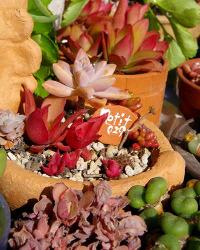 ミニシクラメンの葉組み、多肉植物に素焼きプレートなど_a0136293_1631485.jpg
