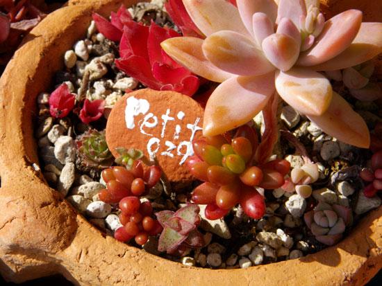 ミニシクラメンの葉組み、多肉植物に素焼きプレートなど_a0136293_16325462.jpg