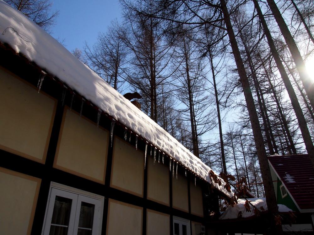 2月も最終日・・春を思わせる陽気に雪どけが進みます!_f0276498_23121622.jpg