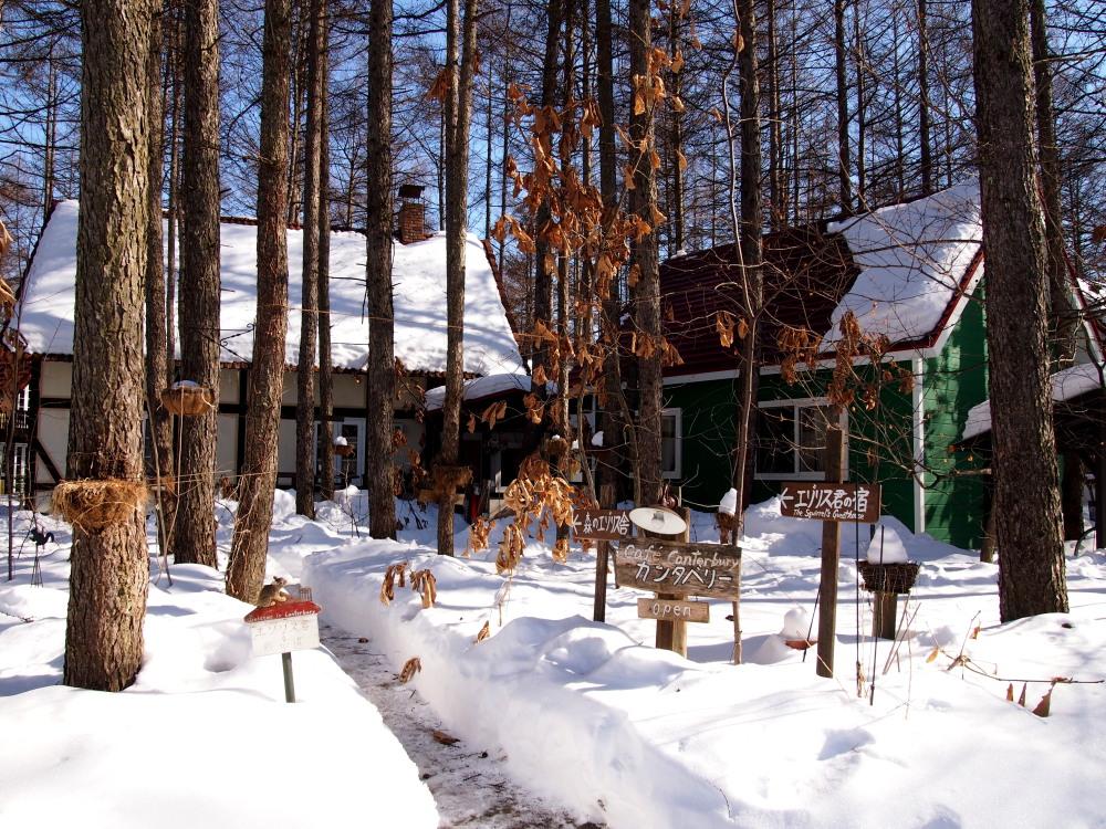 2月も最終日・・春を思わせる陽気に雪どけが進みます!_f0276498_23124650.jpg
