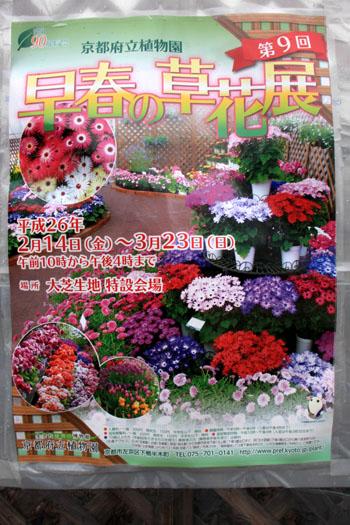 早春の草花展 植物園_e0048413_17444976.jpg