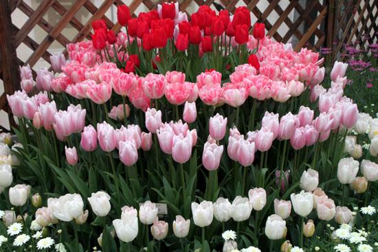 早春の草花展 植物園_e0048413_17453062.jpg