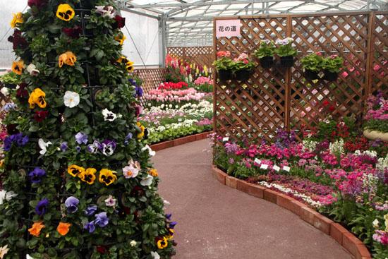 早春の草花展 植物園_e0048413_1745446.jpg