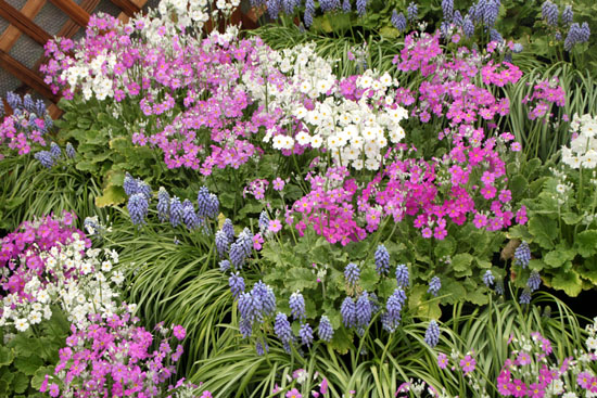 早春の草花展 植物園_e0048413_17455684.jpg