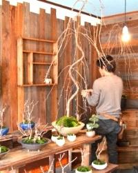 さくら盆栽展はじまりました_d0263815_15304063.jpg
