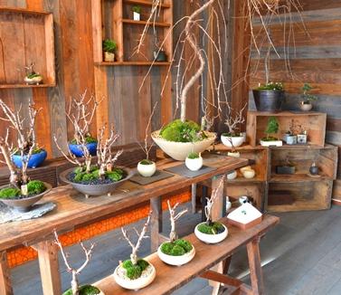 さくら盆栽展はじまりました_d0263815_15313100.jpg