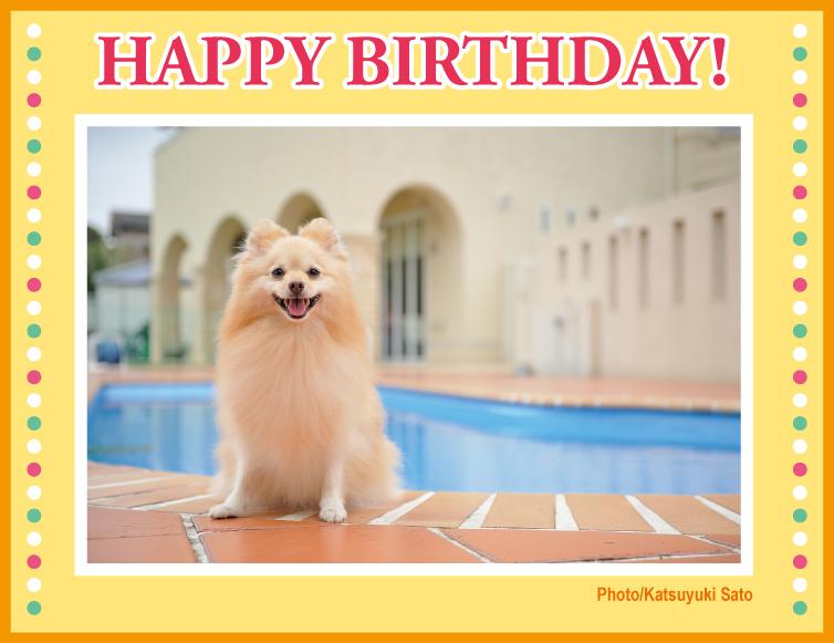 パールちゃん、お誕生日おめでとう♪_d0102523_1585171.jpg