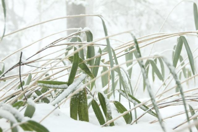 今日も雪がふりました _f0091207_21244091.jpg