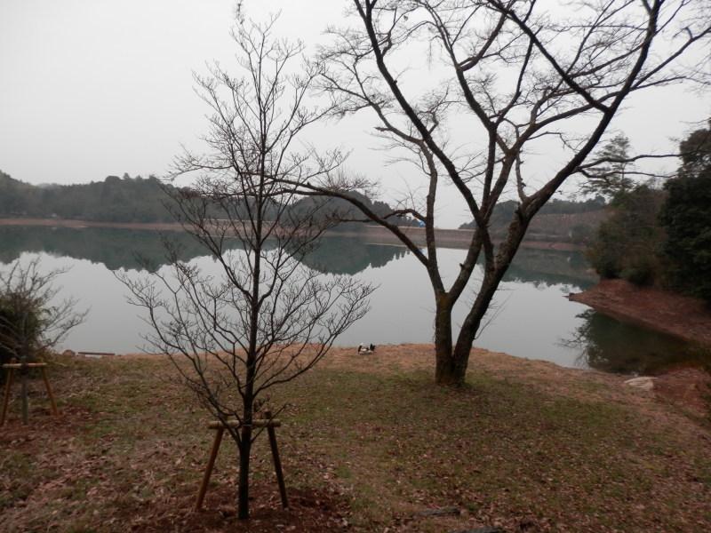 greengreenvillage日田へ~_a0125419_19363587.jpg