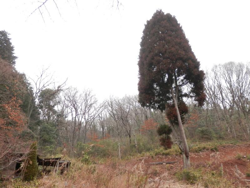 greengreenvillage日田へ~_a0125419_19384895.jpg