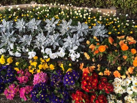 春があちらこちらに・・・♪3/2②_b0247223_20405860.jpg