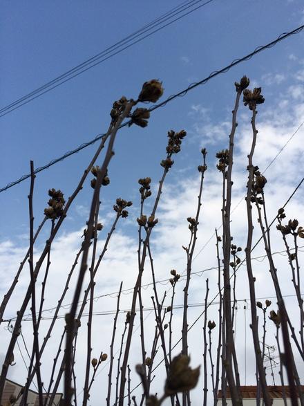 春があちらこちらに・・・♪3/2②_b0247223_20411574.jpg
