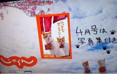 CMにゃ〜_f0196753_0233291.jpg