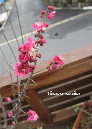 「草木弥生月」_a0243064_11025918.jpg