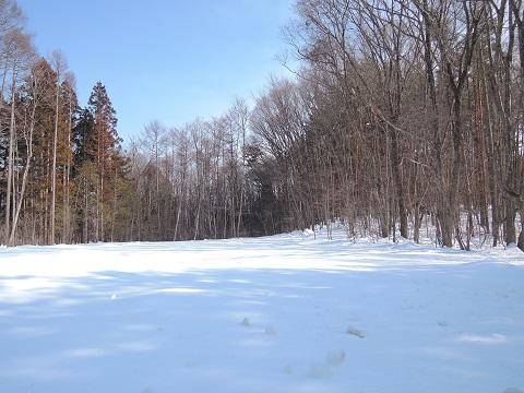 大雪のその後・・・^^;_a0211886_11523056.jpg