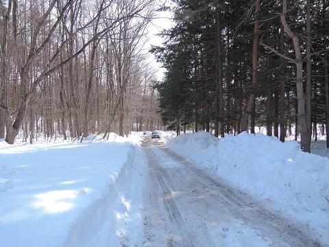 大雪のその後・・・^^;_a0211886_11555293.jpg