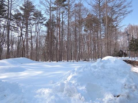 大雪のその後・・・^^;_a0211886_16553483.jpg