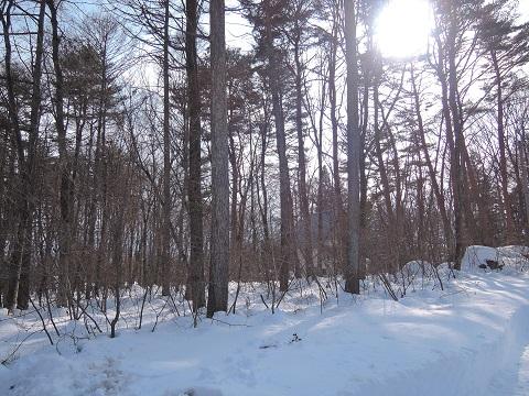 大雪のその後・・・^^;_a0211886_174105.jpg