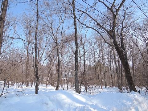 大雪のその後・・・^^;_a0211886_175440.jpg