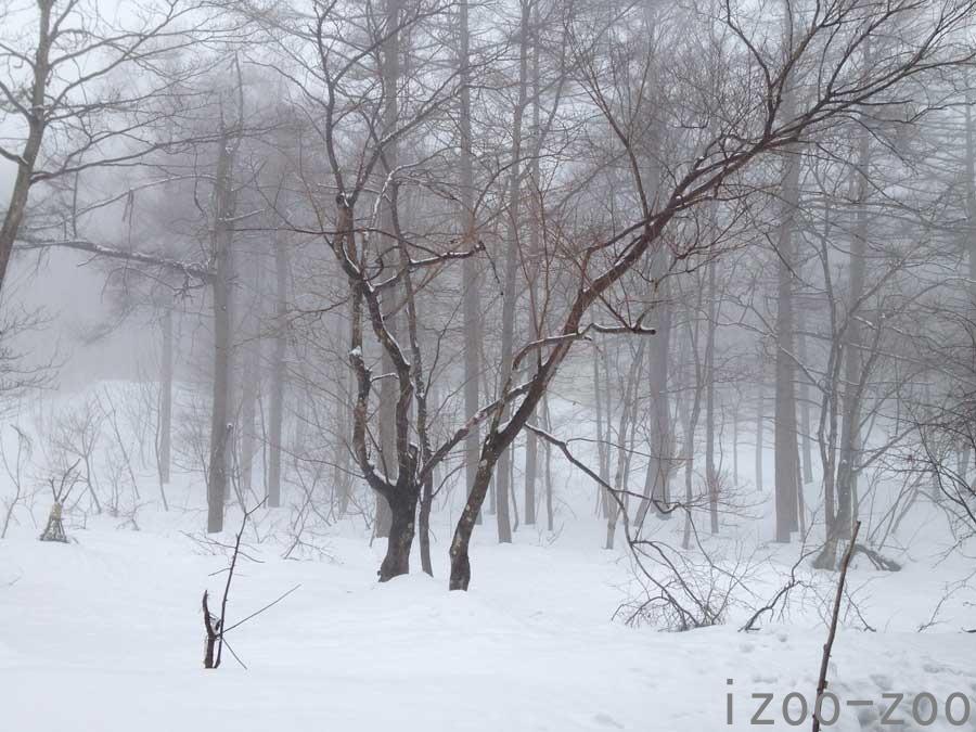 霧の中_c0223095_15405865.jpg