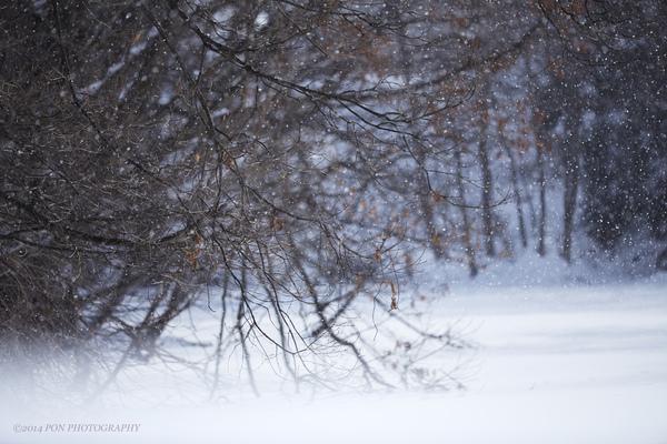 春は名のみの風の寒さや_b0060822_22321938.jpg