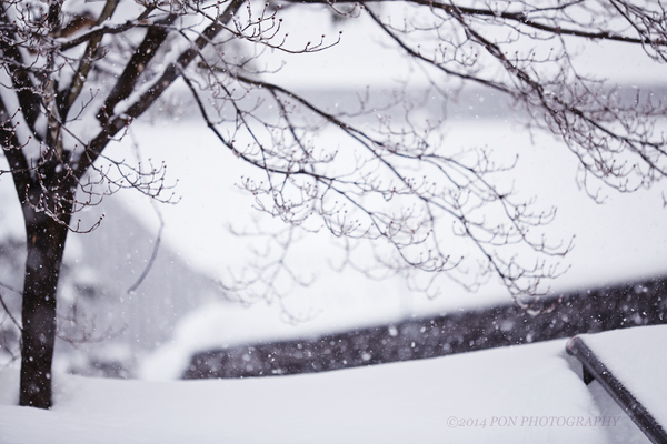 春は名のみの風の寒さや_b0060822_2236532.jpg
