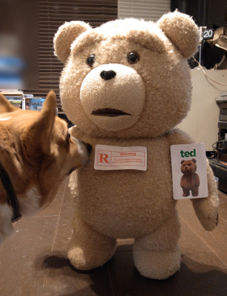 TED対ROSSI_b0310424_13011040.jpg