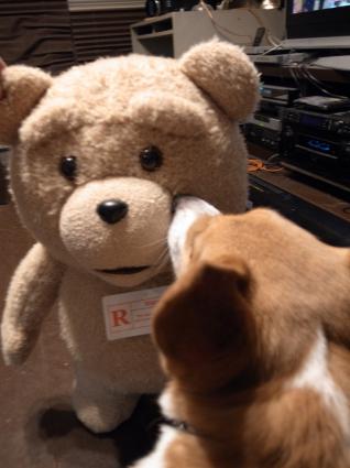 TED対ROSSI_b0310424_13011801.jpg
