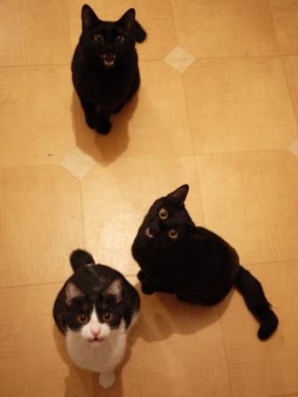 はじめてのひなまつり猫 ぎゃぉすてぃぁらみるきぃ編。_a0143140_22473423.jpg