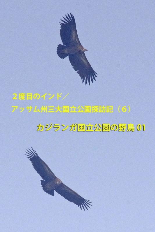 b0144049_15523565.jpg