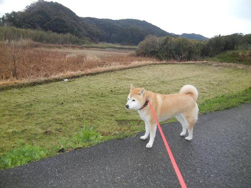 '14,3,3、(月)愛ちゃんとこころちゃんの桃の節句!_f0060461_850246.jpg